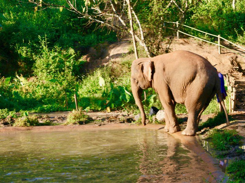 Spår av opium och elefanter