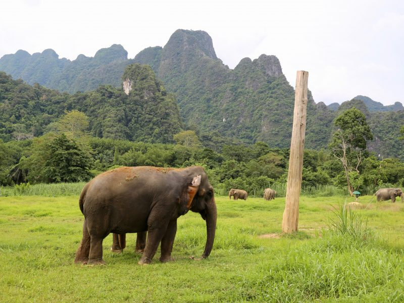 Elefanten – en omdebatterad jätte